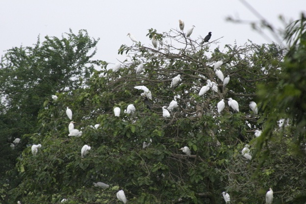 Best home to thousands of Storks