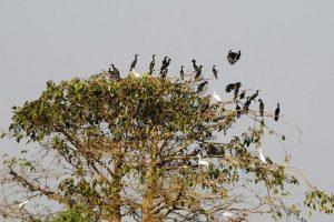 Enlarged view of Bang Lang Bird of Sanctuary