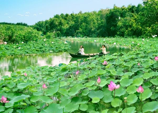 Lotuses blossom in river at Tram Chim