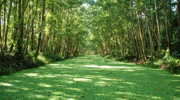 Lung Ngoc Hoang nature reserve is regarded as green lung of Mekong delta