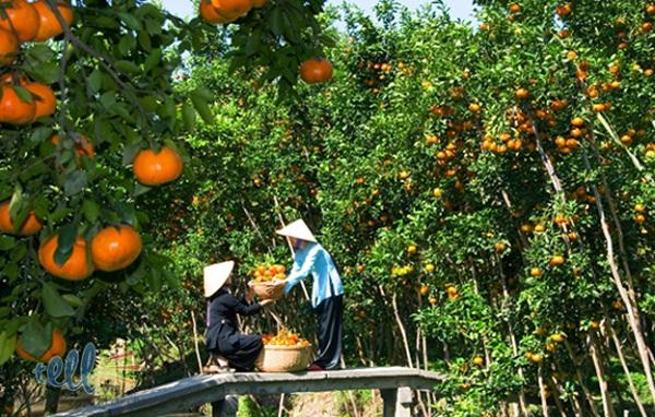 Lush gardens of fruits on Thoi Son islet