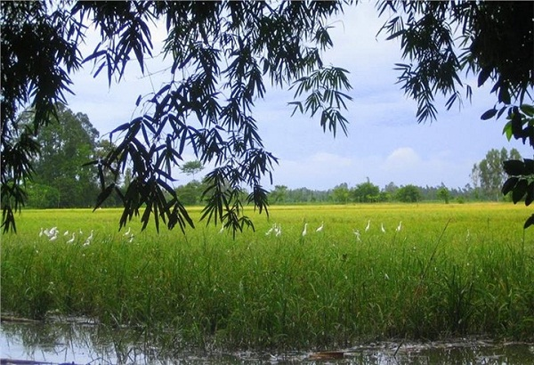 The rice field surrounding the sanctuary