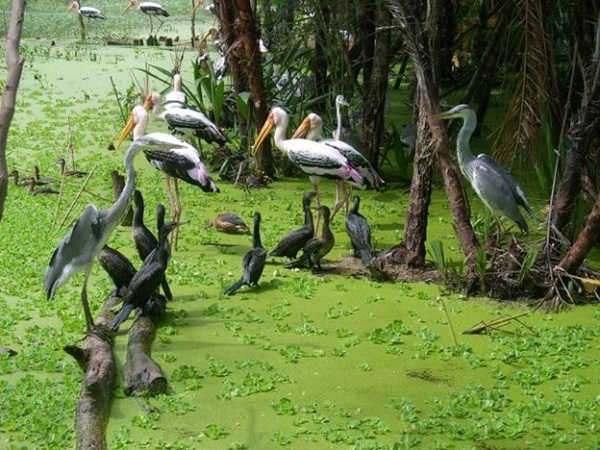 Lots of endangered animals live at Lung Ngoc Hoang nature reserve