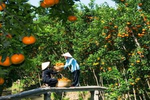 Fruit Orchard – one of the should not be missed destinations in a Mekong Delta river tour