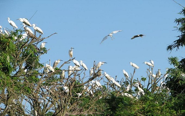 Bang Lang stork garden - home to thousands of storks in Can Tho