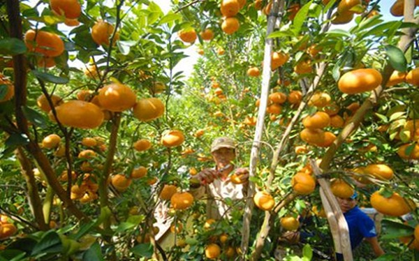 Travellers enjoy tropical fruits at any time of year when join a Mekong Delta tour