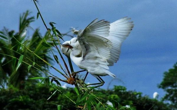 Bang Lang Stork Garden
