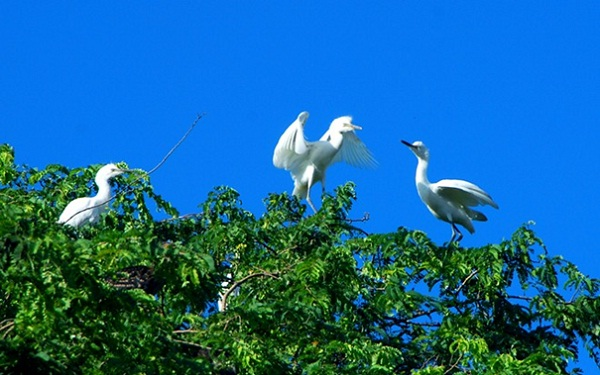 3 unique bird sanctuaries in western Vietnam