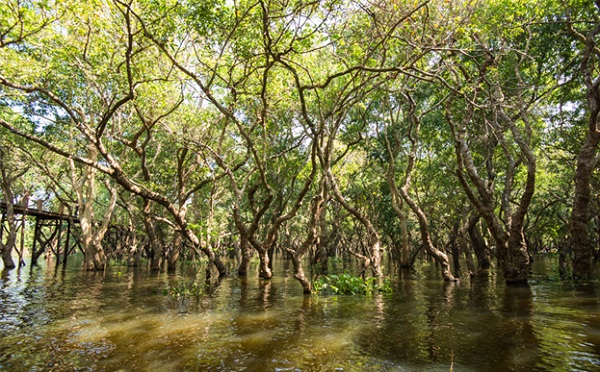 The flooded forests in Cambodia are home to millions of spices.