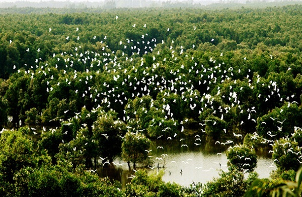 Tram Chim National Park  is home to as many as 200 types of birds which make up ¼ the bird population in Vietnam