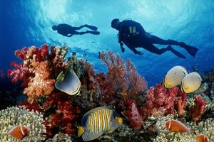 Admiring amazing coral reefs while snorkeling in Phu Quoc Island