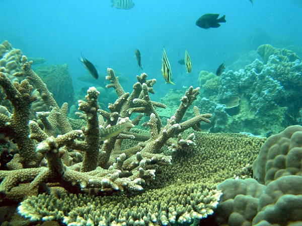 Stunning coral reefs