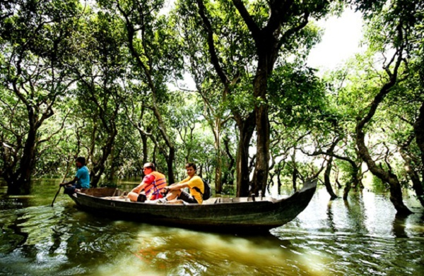 Tourist would like sailing through the mangroves and indigo forests