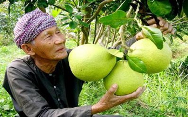 Nam Roi pomelo is outstanding with delicious flavor and also very nutritious