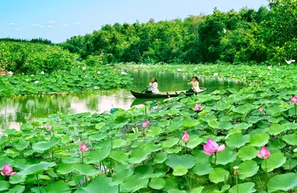 Here is a special field of lotus bloom seasons landscape for visitors to the romantic canoe fishing, picking lotus flooding season