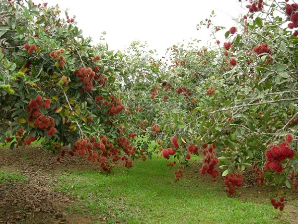 Visit a fruit orchard to see hundred kinds of fruit growing and try them all