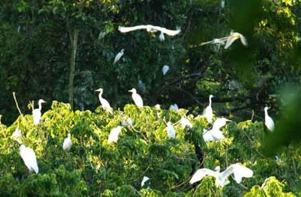 There are various species of storks living at Bang Lang Stork Garden