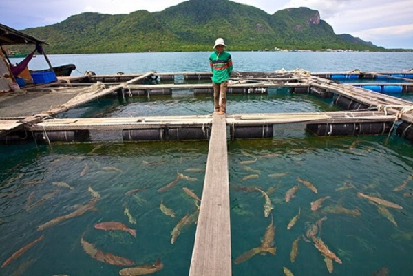 Floating fish market, Con Dao Island
