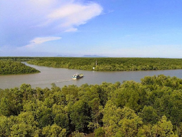 Can Gio Mangrove Forest, Vietnam