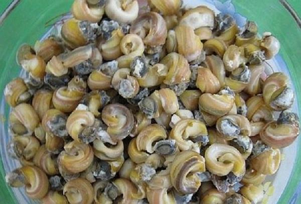 Tan Phong snail