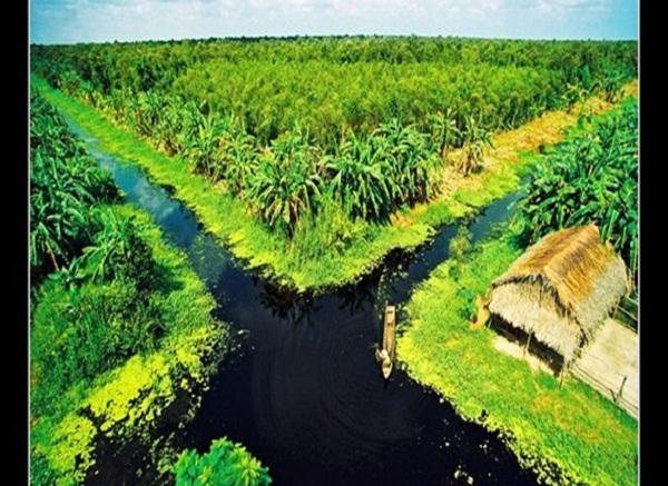 U Minh Thuong National park