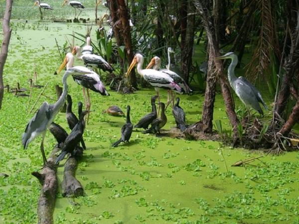 Bac Lieu Bird garden