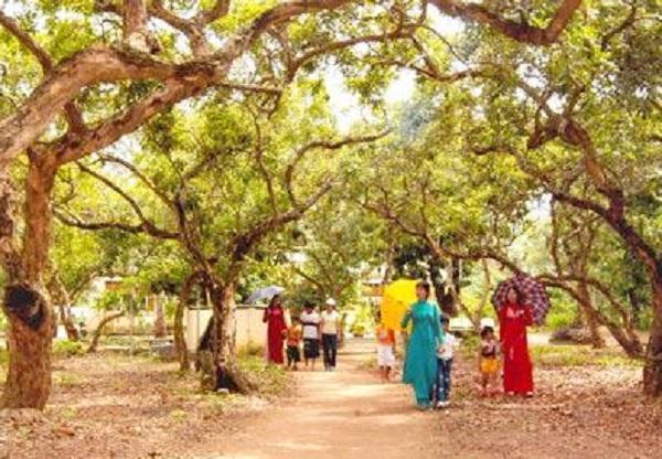 The old longan garden