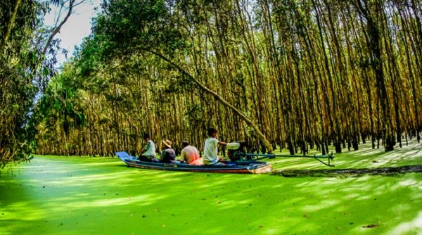 Into the green world of Tra Su cajeput forest