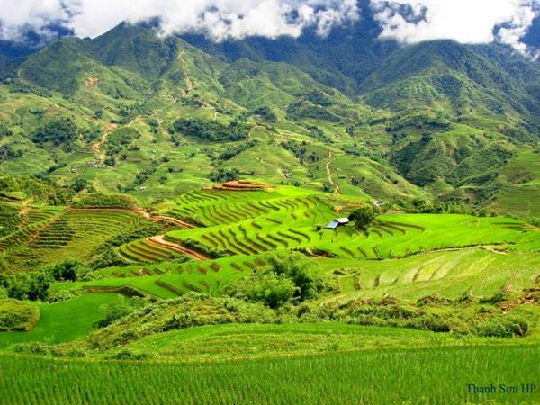 Terraces in Muong Hoa valley