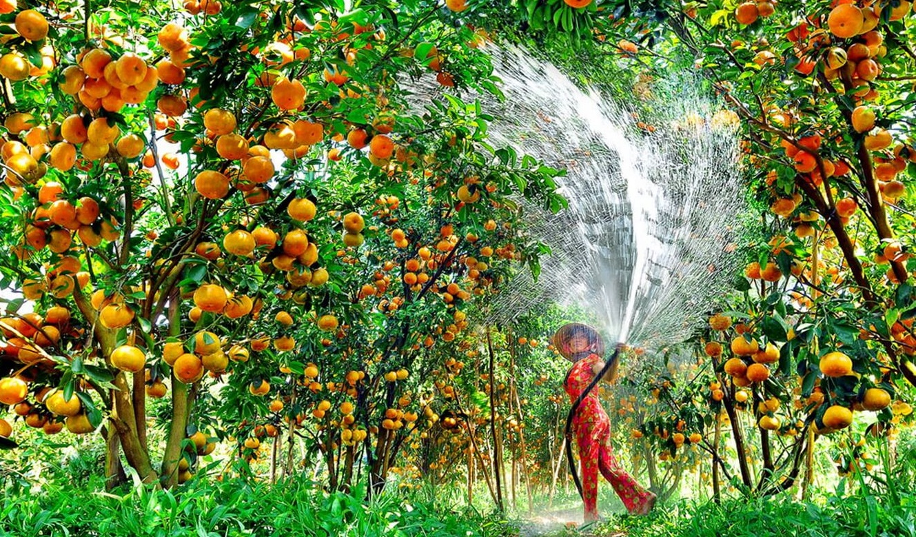 Fruit orchard in the Mekong Delta-source: www.bestpricevn.com