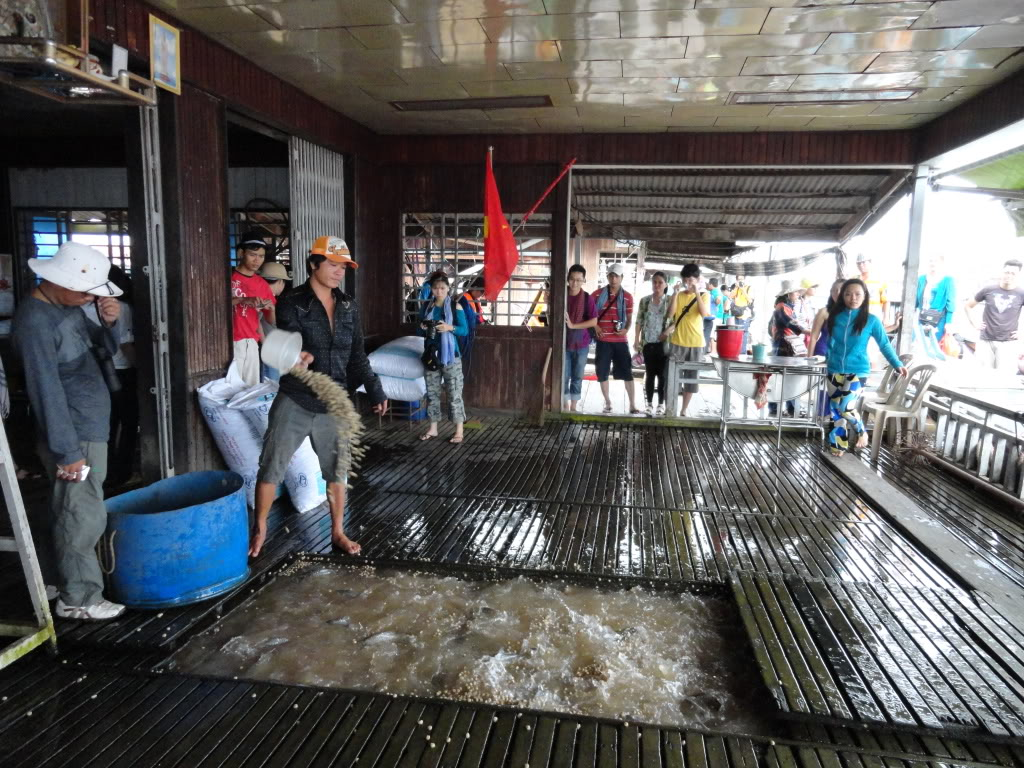 The men feed fishes in big floating house