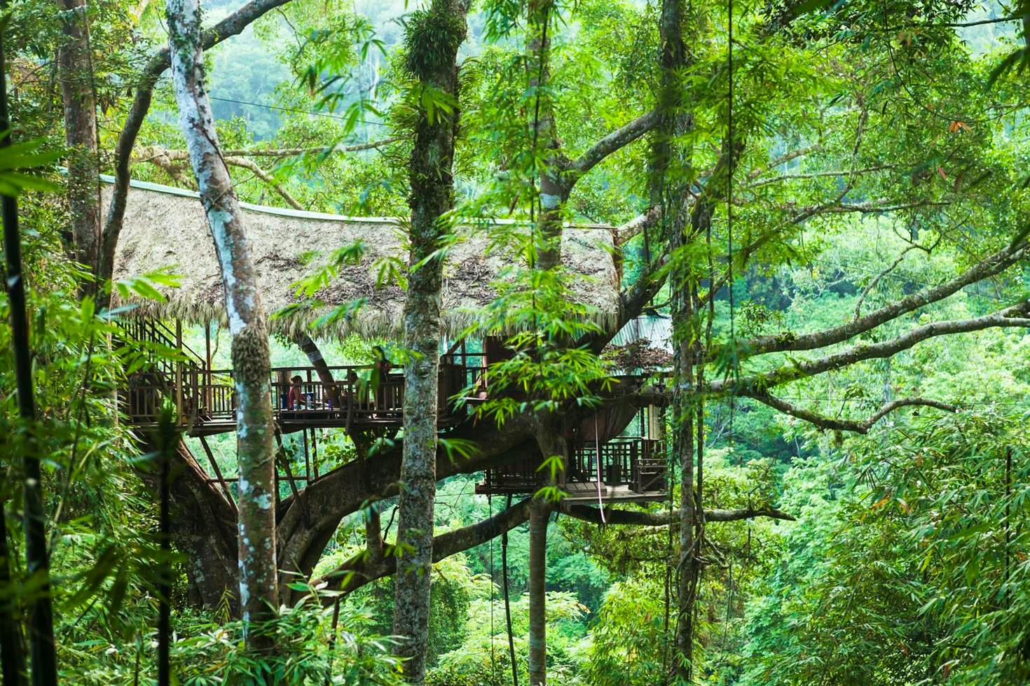 Tree house at the Gibbon Experience