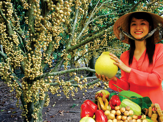 Four ideal orchards to enjoy fruits in Mekong Delta