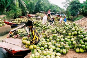 People delivering coconuts in Ben Tre