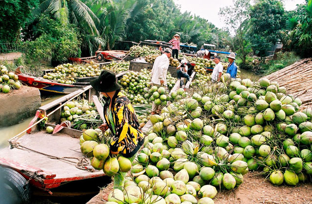 Ben Tre is famous for cocconut trees