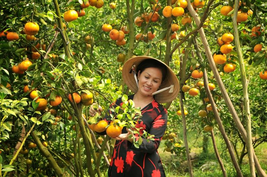 Plug fresh fruit
