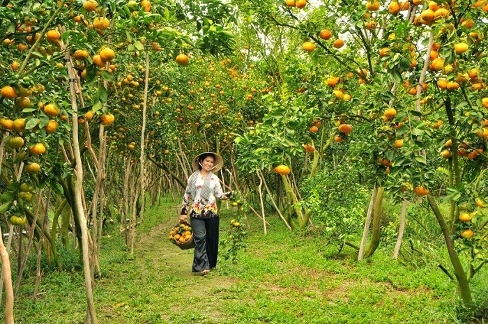 The tender beauty of Mekong delta via a fruit garden