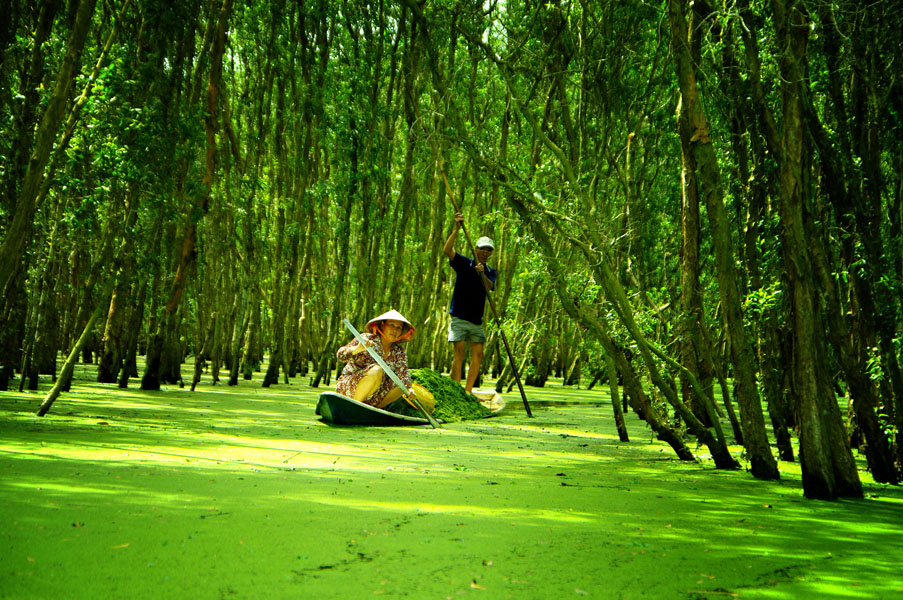 Tra Su Melaleuca Forest