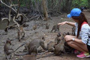 Monkeys-Island