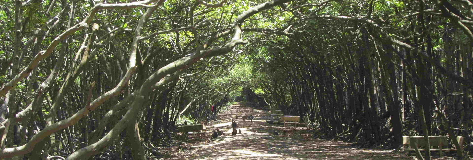 Can Gio Mangrove Forest full day tour
