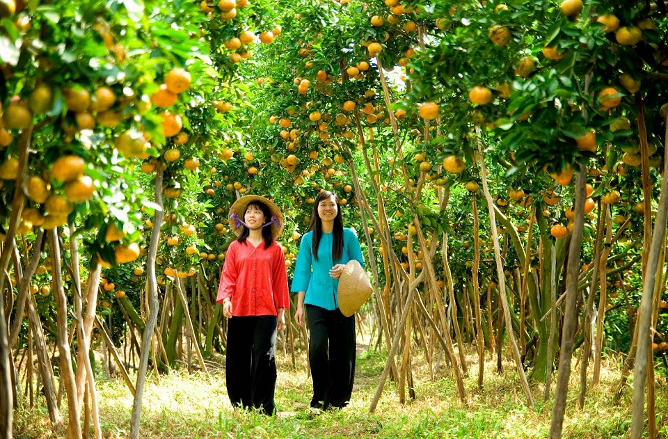 Vinh Long fruit orchards