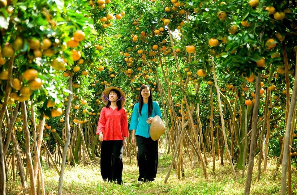 Vinh Long fruit orchards