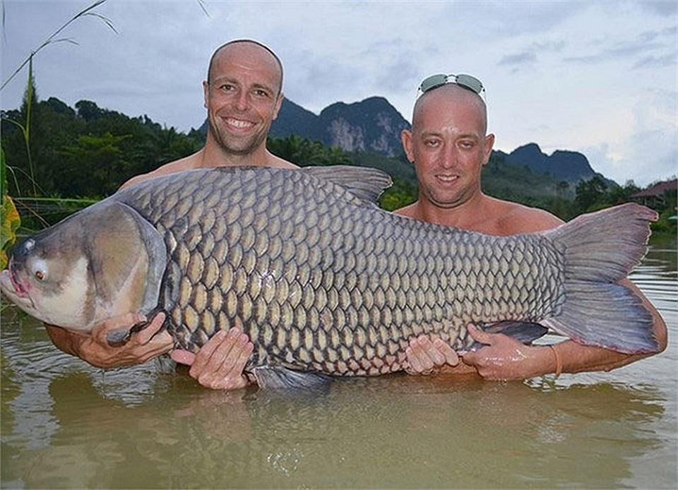 big freshwater carp