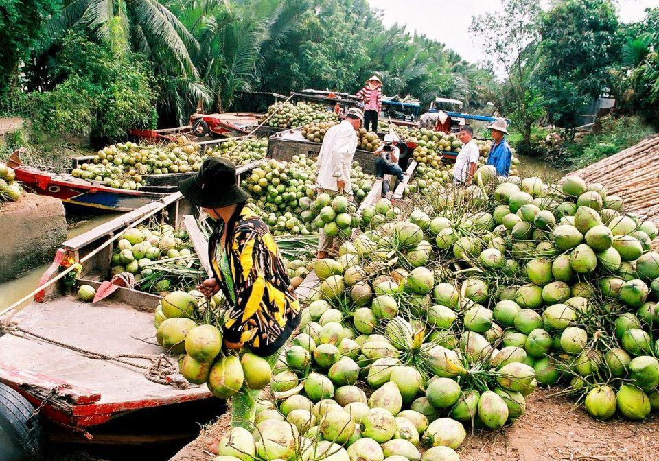 Coconut Ben Tre Vietnam