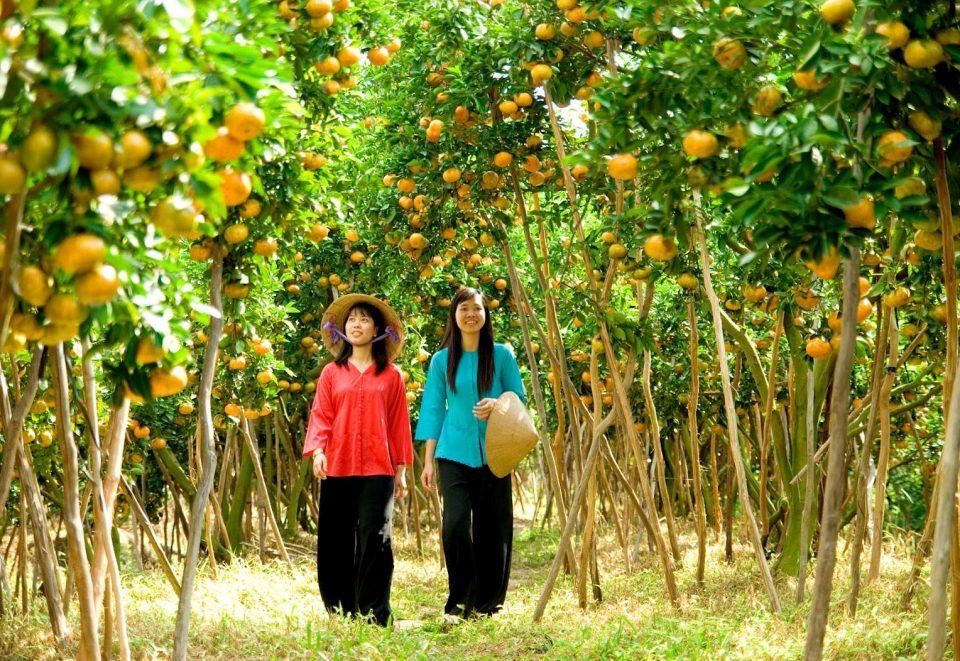 Orchard - Ben Tre Vietnam
