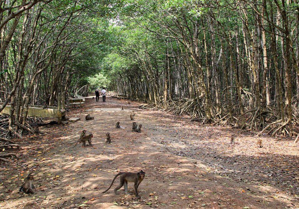 Monkey Island Can Gio Vietnam